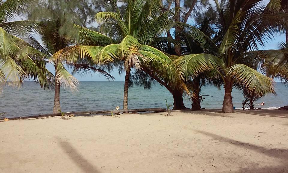 Trees at beach